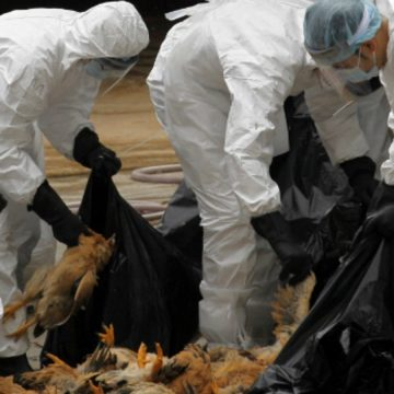 One person in China is infected with bird flu