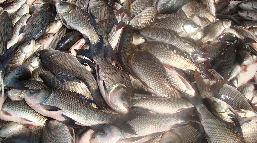 Beware of fish.!.sold formalin on fish for sale..700 kg of fish destroyed..!